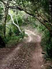 MG9963_forest walk (Medium)